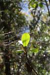 Cloud forest leaf