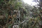 Manu canopy walkway [wayquecha-andes_0268]