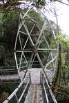 Manu canopy walkway [wayquecha-andes_0271]