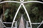 Manu canopy walkway [wayquecha-andes_0272]