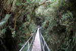 Manu canopy walkway [wayquecha-andes_0273]