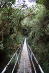 Manu canopy walkway [wayquecha-andes_0274]