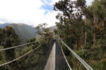 Manu canopy walkway [wayquecha-andes_0289]