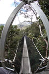 Manu canopy walkway [wayquecha-andes_0292]