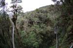 Manu canopy walkway [wayquecha-andes_0312]