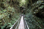 Manu canopy walkway [wayquecha-andes_0314]