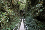 Manu canopy walkway [wayquecha-andes_0315]