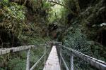 Manu canopy walkway [wayquecha-andes_0316]