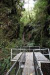 Manu canopy walkway [wayquecha-andes_0317]