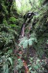 Waterfall at Manuq p'uyu chaca [wayquecha-andes_0319]
