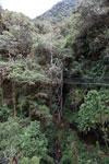 Manu canopy walkway [wayquecha-andes_0322]