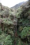 Manu canopy walkway [wayquecha-andes_0323]