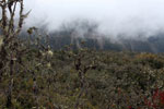 Cloud forest in Peru [wayquecha-andes_0392]