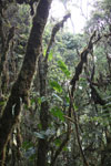 Cloud forest in Peru [wayquecha-andes_0414]