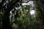 Cloud forest in Peru
