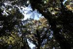 Tree fern [wayquecha-andes_0521]