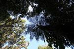 Tree fern [wayquecha-andes_0523]