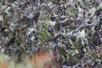 Bird [wayquecha-andes_0643]