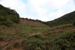 Deforestation of a hillside along the road to Manu