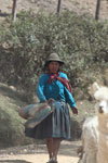 Quechua woman in the Andes with her livestock