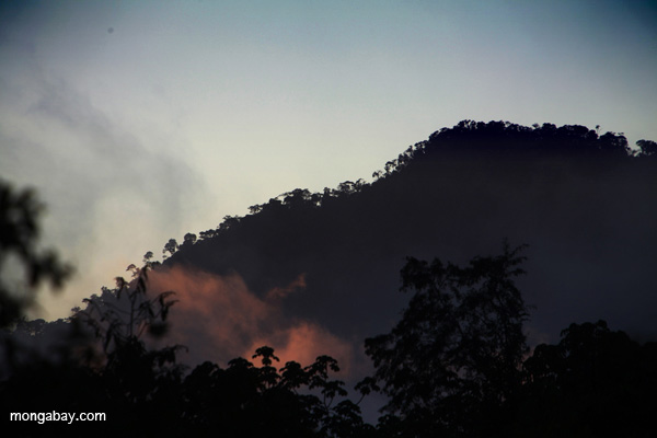 Though scientists are striving hard to discover how the world's forests will respond to climate change – whether they will tip from being carbon sinks to being carbon sources – much remains clouded in mystery. Photo credit: Rhett Butler.