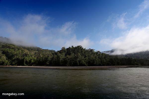Río Pini Pini  fluyendo hacia afuera del Parque Nacional del Manu. Foto de: Rhett A. Butler.