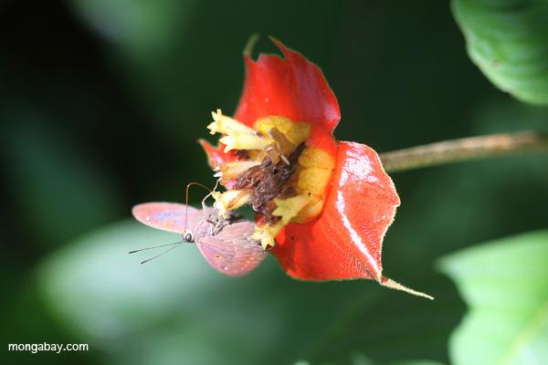 Manu está considerado como uno de los ecosistemas con mayor biodiversidad del planeta. Foto de Rhett A. Butler.