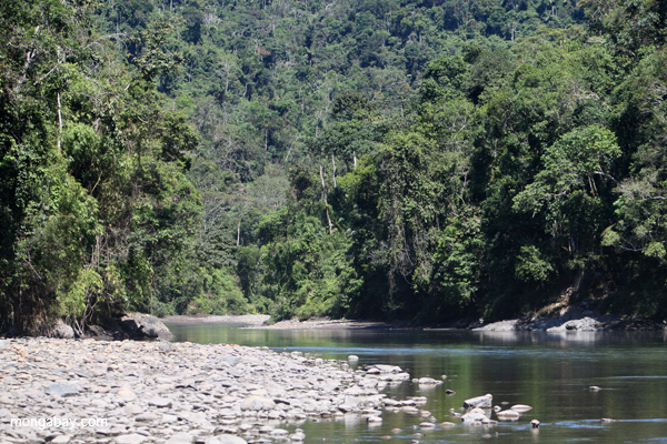 River in Manu National Park. Photo by: Rhett A. Butler.