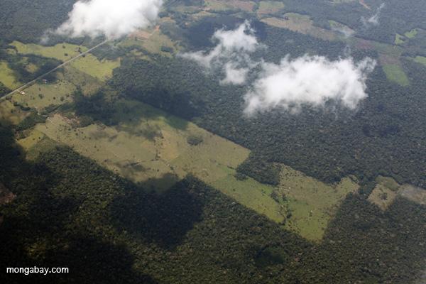 Deforestación por la crianza de Ganado en Perú. Foto por: Rhett A. Butler.