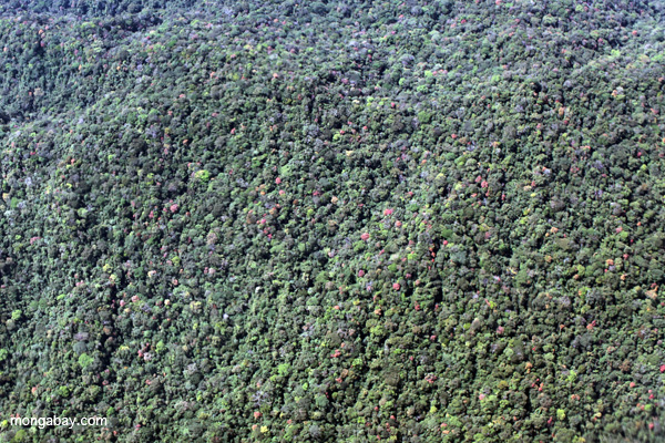 High biodiversity submontane forest of the Peruvian Amazon. Photo by: Rhett A. Butler.