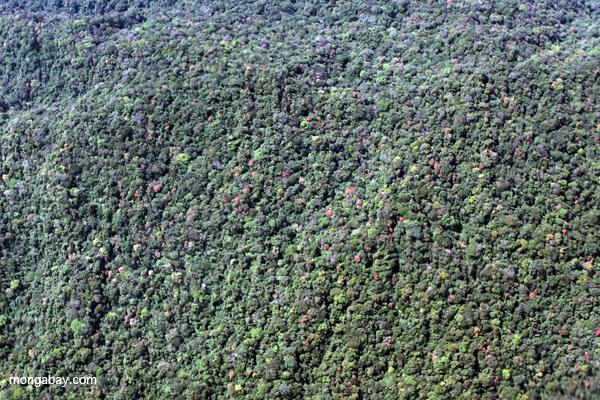 La alta biodiversidad del bosque submontano de la Amazonia peruana. Foto de: Rhett A. Butler.