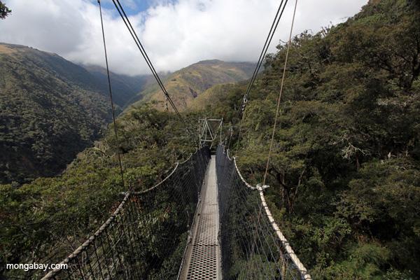A canopy walk-way in Manu Biosphere Reserve. Photo by Rhett A. Butler / mongabay.com