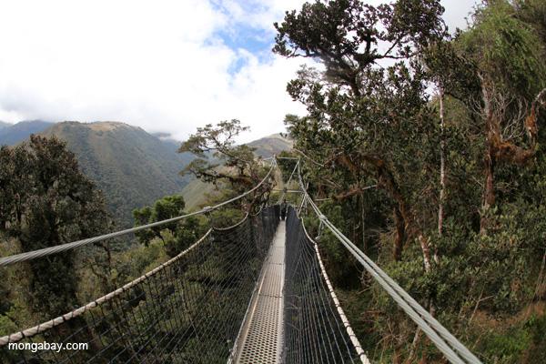 Canopy walkway in Peru