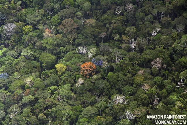 Amazon rainforest in Peru