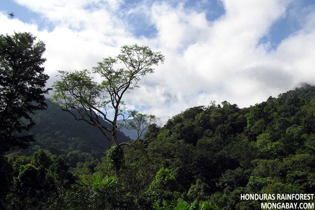 Pico Bonito, Honduras