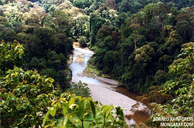 Borneo rainforest in Sabah, Malaysia