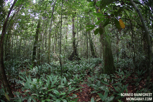 Forest Floor In Borneo