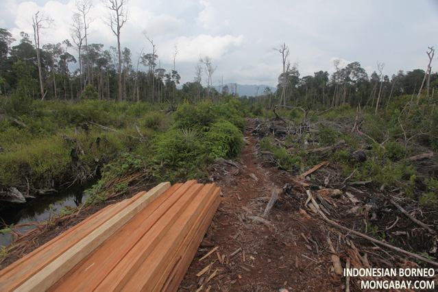Illegally logged rainforest wood cut into boards in Indonesian Borneo