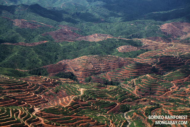 Deforestation for palm oil production in Malaysian Borneo
