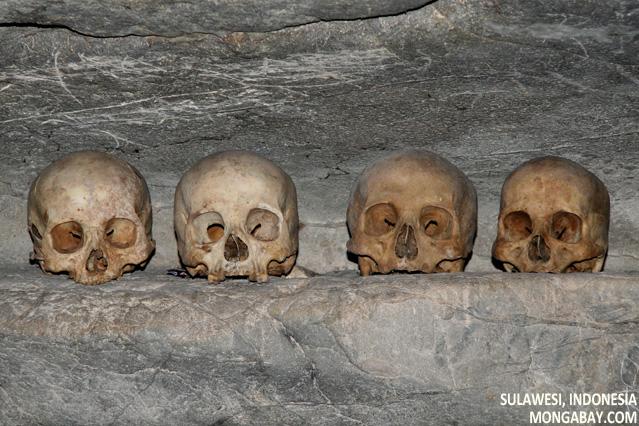 Human skulls in cave at Londa Nanggala