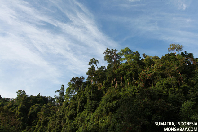 Rainforest in Gunung Leuser National Park, Sumatra, Indonesia