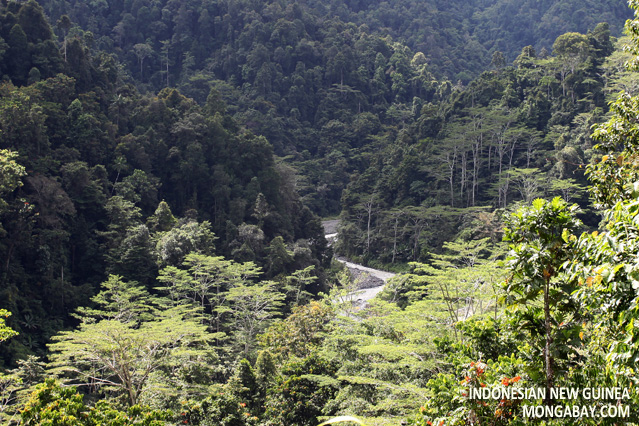 Rainforest in West Papua, Indonesian New Guinea