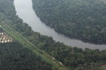 Oil palm near a river in Malaysia