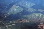 Oil palm on peatland -- sabah_0033