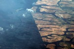 Oil palm on peatland -- sabah_0036