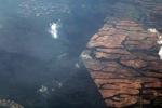 Oil palm on peatland