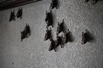 Bats -- sabah_0103