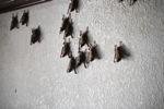 Bats -- sabah_0105