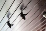 Bats -- sabah_0106