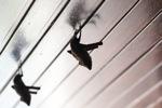 Bats -- sabah_0108